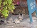A kitten having a siesta